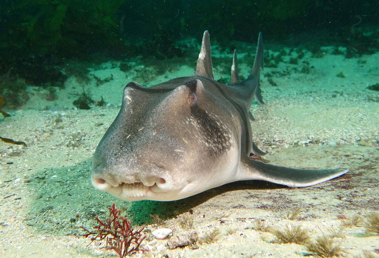 какие акулы водятся в средиземном море фото каких ингредиентов делаются