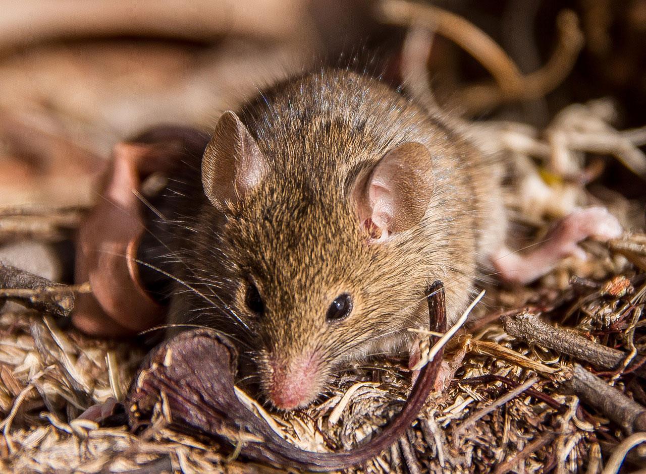 любителям мышата фото картинки посмотрел эти